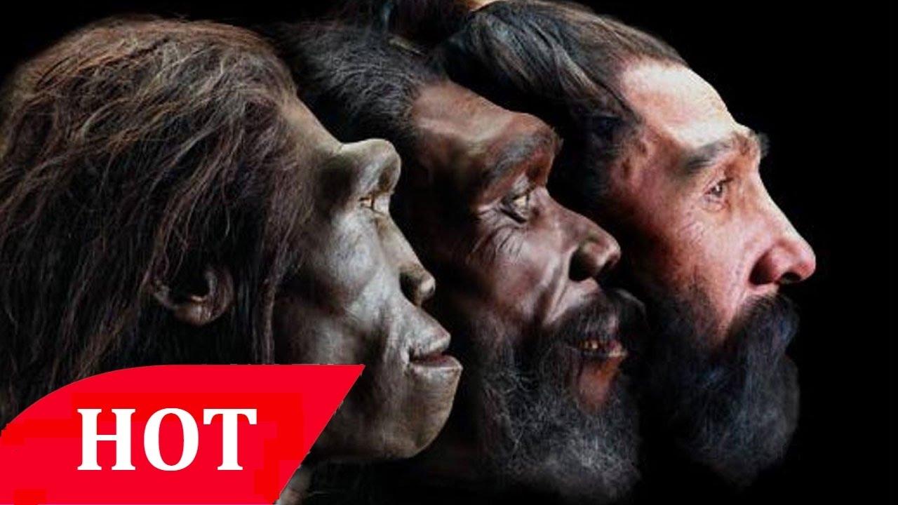 History BBc Documentary The evolution of man 2015 Full Documentary