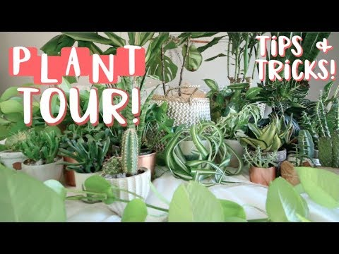 Houseplant tour! All of my Houseplants and How to Keep Them Alive!