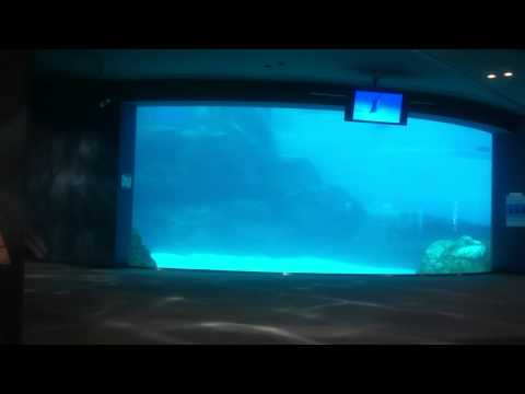 名古屋港水族館;Nagoya port aquarium in Japan.MOV