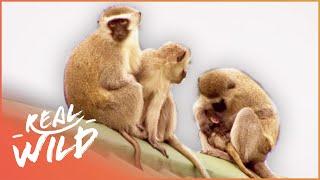 Street Monkeys - New Order [Documentary Series] | Wild Things thumbnail