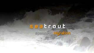 Meerforelle - Ostsee - Schutzgemeinschaft Langballigau - 2014 - Seatrouts - Ostsee