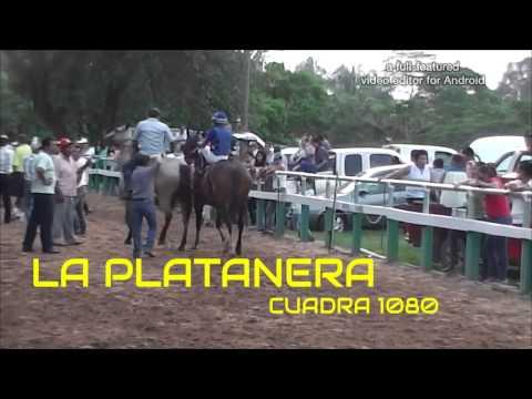 EL CHEMA VENEGAS VS LA PLATANERA