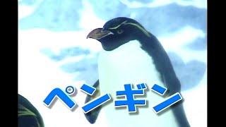地球上に住んでいるたくさんのおともだち!みんなにどんどん紹介するからね。今回は、うみの生き物「ペンギン」の映像をお楽しみ下さい。...