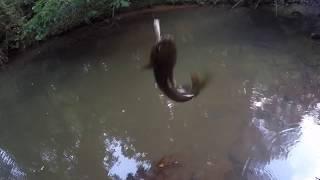 When Nature Calls: Creek Fishing
