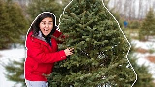 HOW TO GET A CHRISTMAS TREE