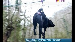 Поисковые собаки Сочи освоили альпинистское снаряжение