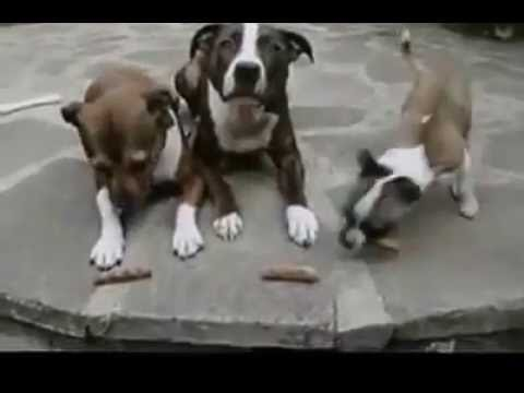 Sometimes Animals Are Jerks YouTube - 32 animals complete jerks