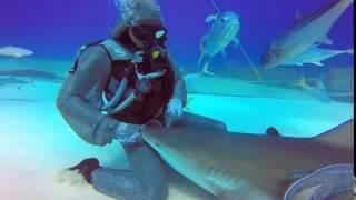 shark cuddling thumbnail