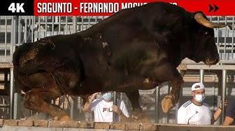 Image del Video: TOROS: Especial ganadería Fernando Machancoses