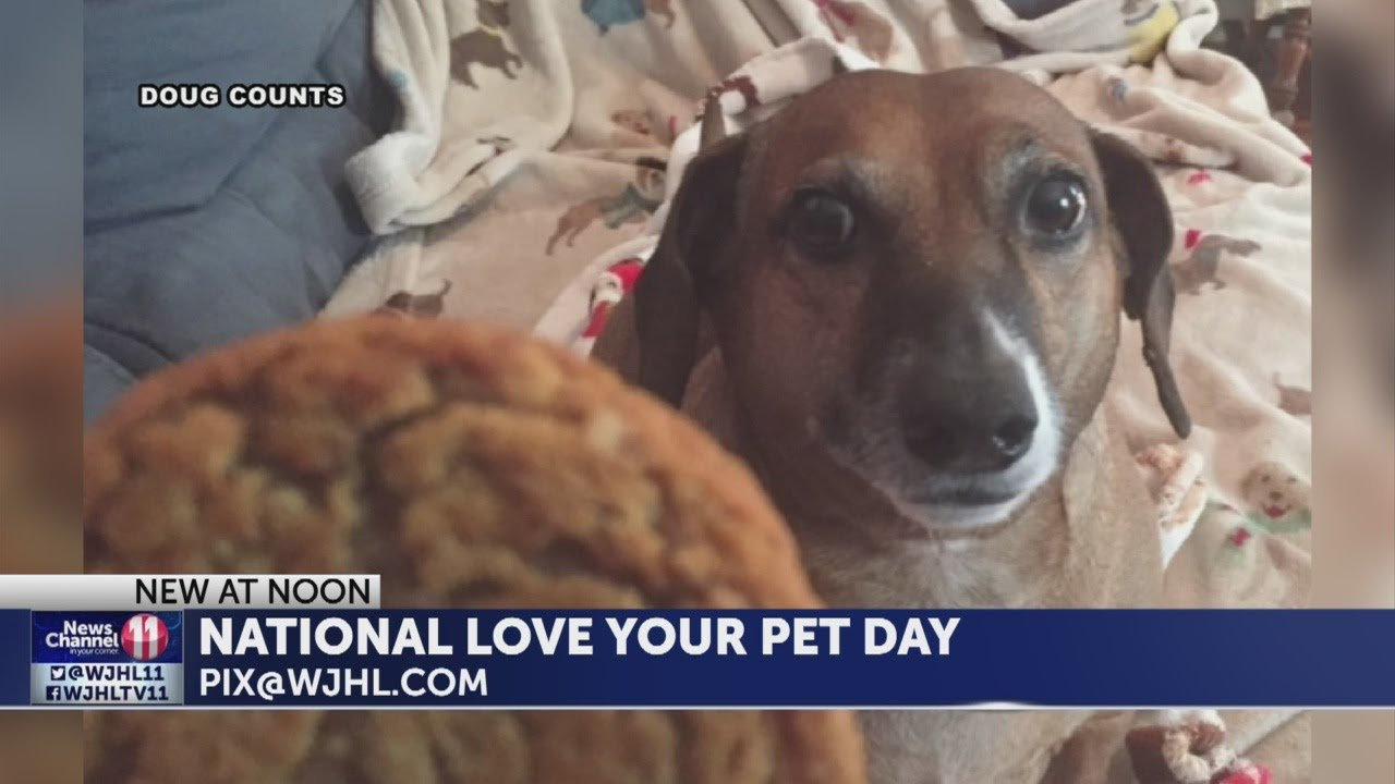It's National Love Your Pet Day so send us your pet pics!