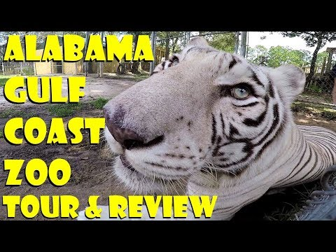 Alabama Gulf Coast Zoo Full Park Tour & Review / INCREDIBLE Animal Encounters