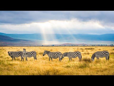 Morning Africa nature sounds: Wildlife, wild animal & bird noise, lions roaring | Mashatu, Botswana