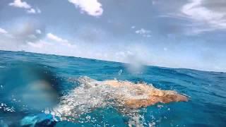 Bahamas Spearfishing - Shark Encounter