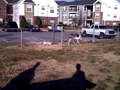 the-gang-at-the-crowne-at-razorback-dog-park-part-2