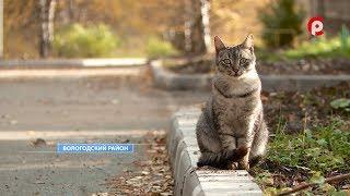 О ремонтах дорог Вологодского района