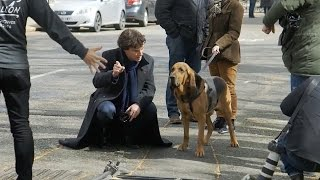 Filming With The Dog - Sherlock