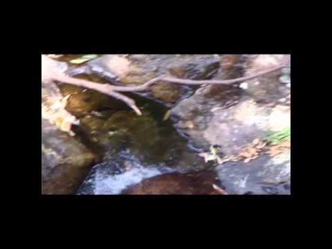 Wutong Mountain River Stream with Chinese Traditional Erhu Music