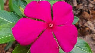 7 Espécies De Flores Que Crescem Rápido