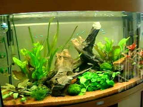 aquarium juwel vision 180 youtube. Black Bedroom Furniture Sets. Home Design Ideas