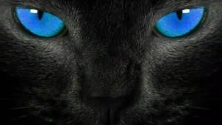 Коты-Воители история Ночноглаза 2 часть