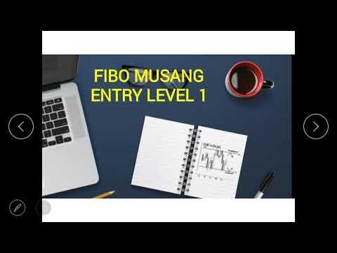 fibo-musang-:-level-entry-1