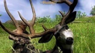 Mule Deer 222