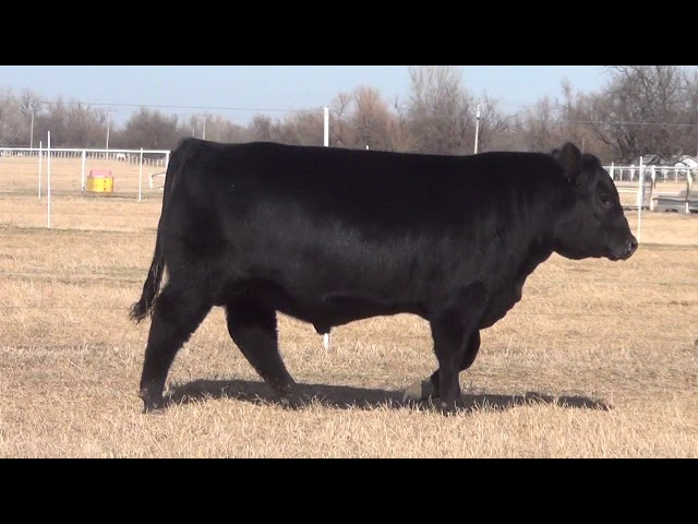 Express Ranches Lot 7
