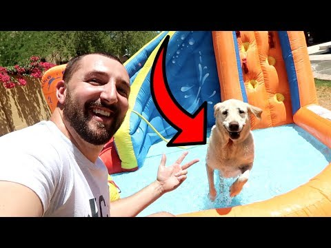 BUYING MY DOGS A PERSONAL WATER PARK!!