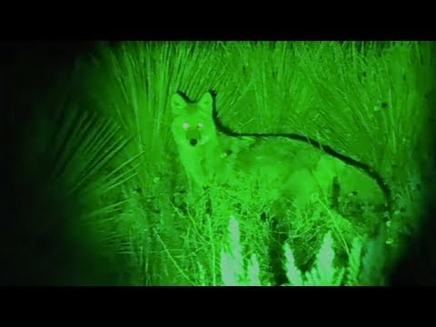 Extra Long Range Coyote Hunting Spotlight - The Coyote Reaper Spotlight By Predator Tactics