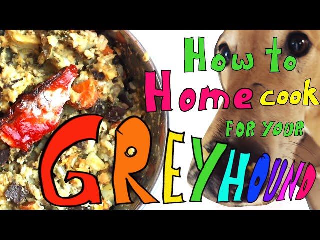 How to home-cook for your Greyhound