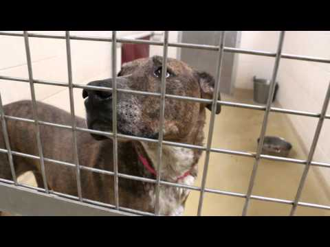 The Long Timers - Humane Society of El Paso