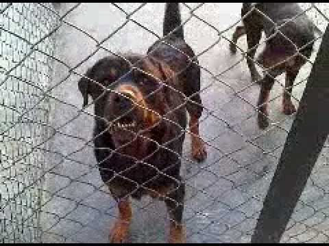 Kennel in Lahore Badiyan3