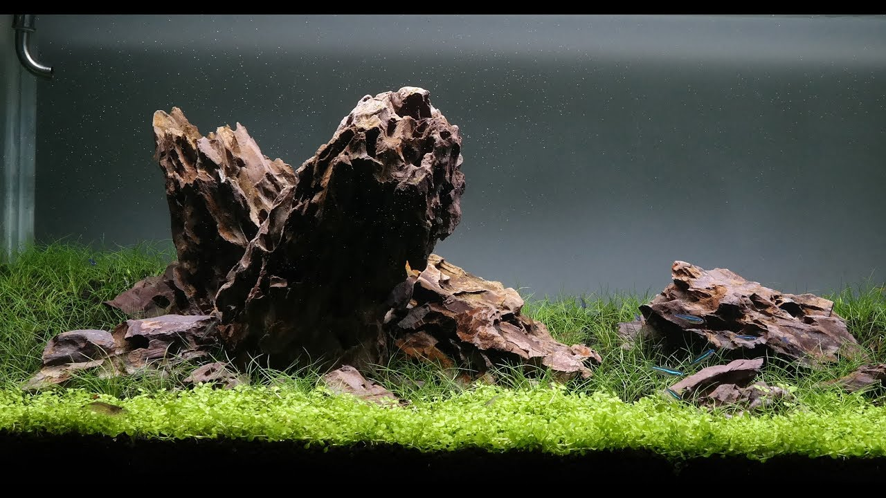 Dragon Stone Iwagumi Aquascape   Day 26