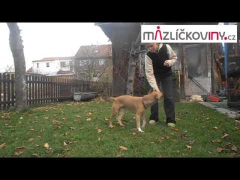 Dogdancing - sestava pro zkoušku F1 - www.mazlickoviny.cz