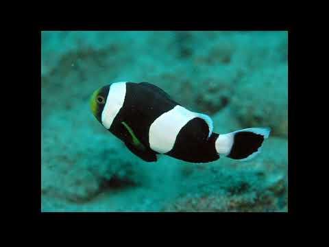 А рыбы в море плавают вот так