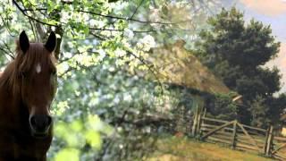 Не для тебя ПЕЛАГЕЯ(Не для тебя придет весна Не для тебя Дон разольется И сердце девичье забьется С восторгом чувств не для..., 2012-11-30T17:34:40.000Z)