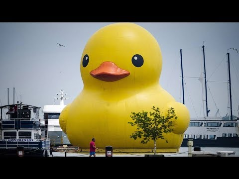 Giant rubber duck floats in Toronto for festival