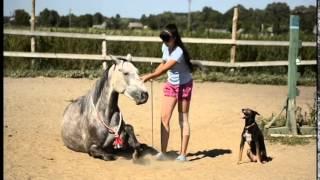 Лошадь против собаки :) Перис и Дана