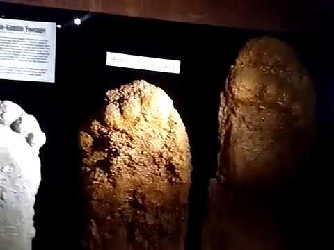 The Austin Museum Of The Weird