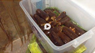 VLOG/Как консервировать баклажаны | Рецепт баклажаны как грибы