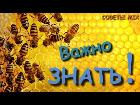 Свойства мёда, лечебные, полезные и целебные свойства меда