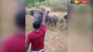 Wild elephant kills person due to provocation