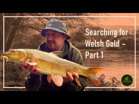 River Wye Barbel - Summer/Autumn