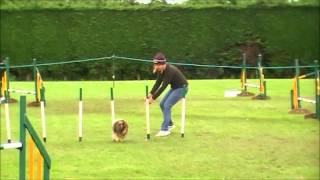 Buzz and Quest in MiniMaxi Pair Relay Crufts Qualifier  SKC 2011