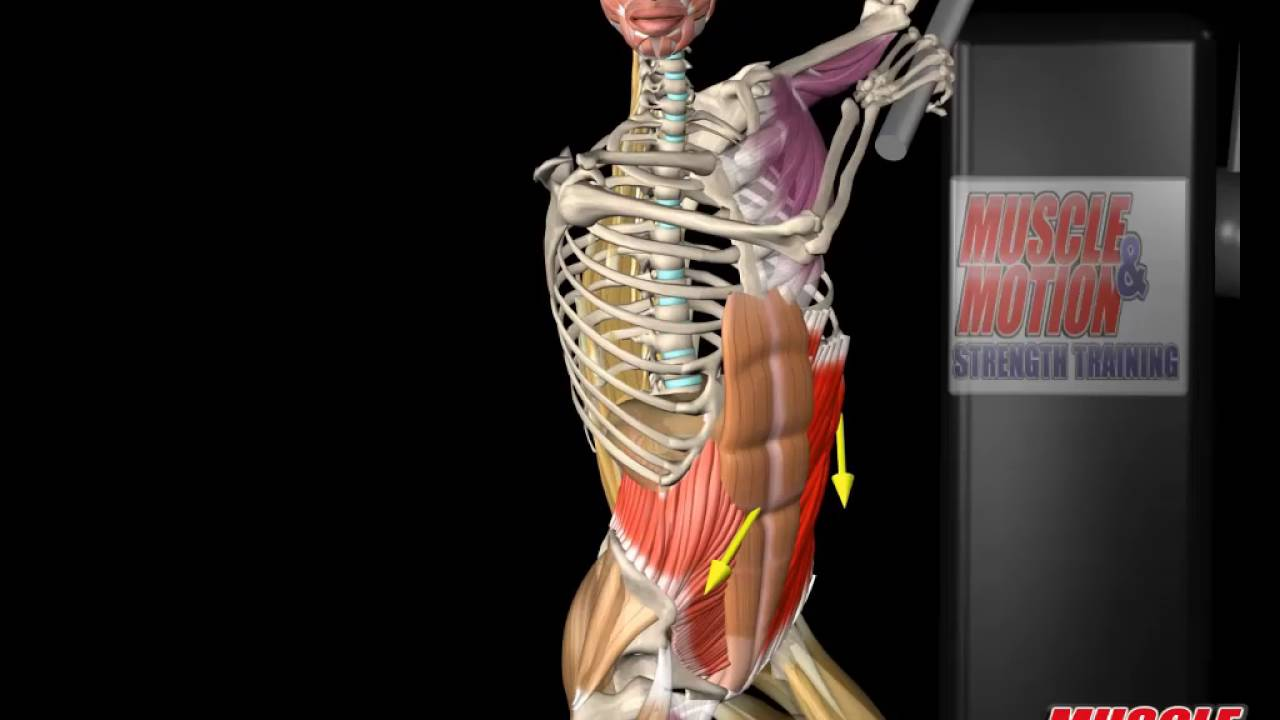 External Oblique Anatomy And Movement Youtube
