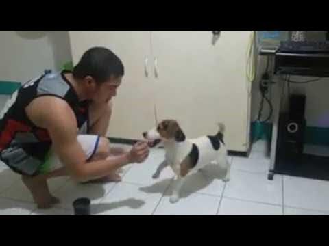 Cute Puppy Does Tricks    ViralHog