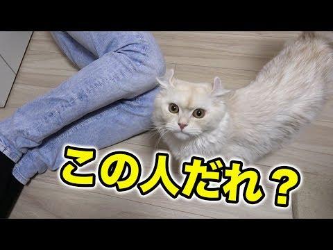 まったく人見知りしない猫