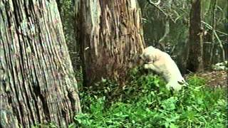 napoleon, as aventuras de um cãozinho valente completo