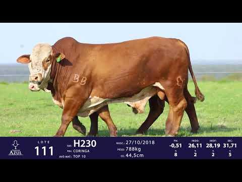 LOTE 111 - TAT H114 H230