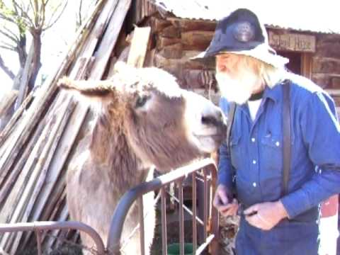 Pedro the donkey for President!